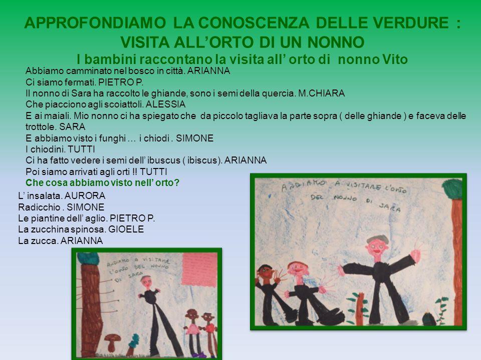 APPROFONDIAMO LA CONOSCENZA DELLE VERDURE : VISITA ALL'ORTO DI UN NONNO I bambini raccontano la visita all' orto di nonno Vito