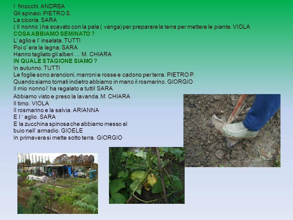 I finocchi. ANDREA Gli spinaci. PIETRO S. La cicoria. SARA.