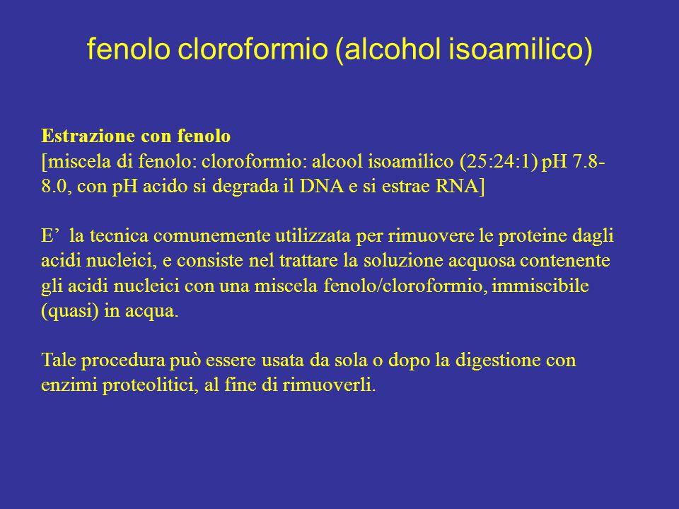 fenolo cloroformio (alcohol isoamilico)