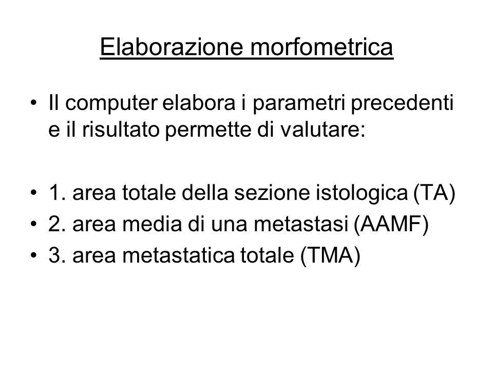 Elaborazione morfometrica