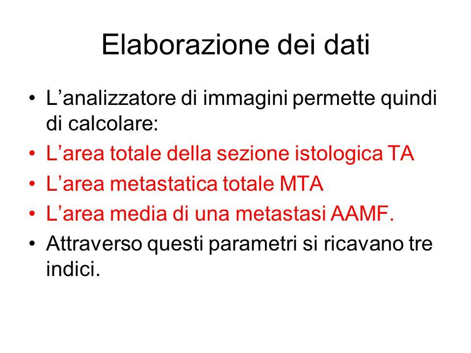 Elaborazione dei dati L'analizzatore di immagini permette quindi di calcolare: L'area totale della sezione istologica TA.