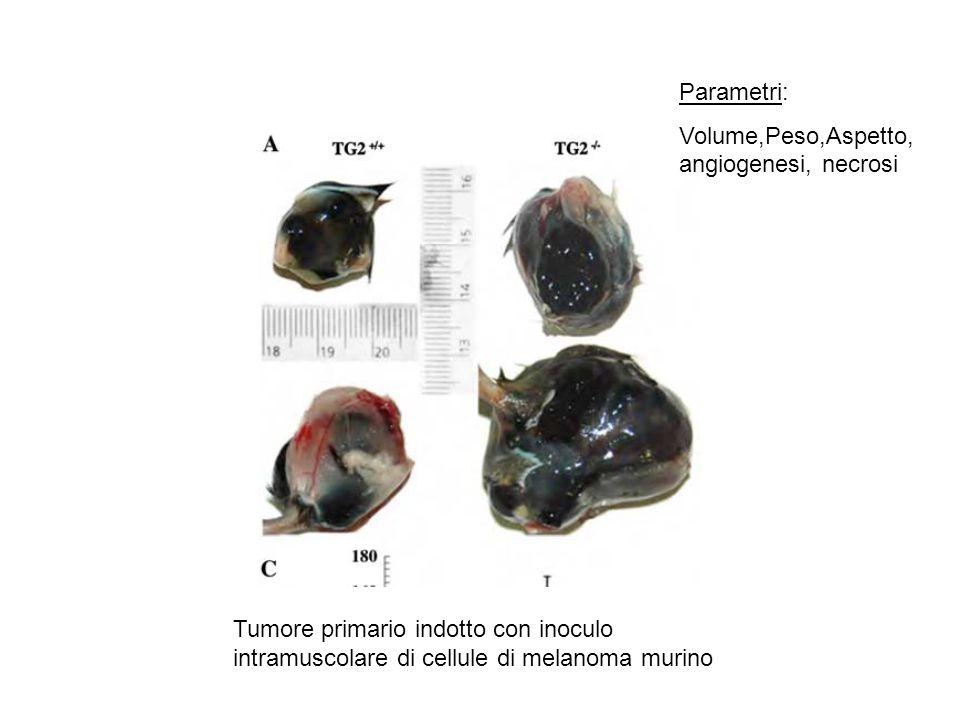 Parametri: Volume,Peso,Aspetto, angiogenesi, necrosi.