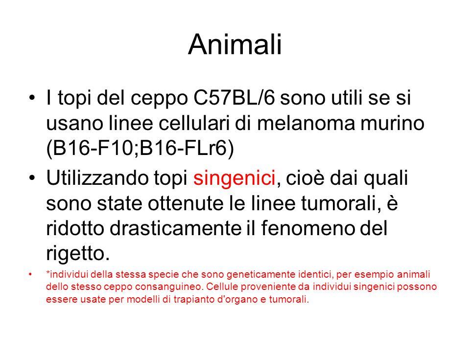 Animali I topi del ceppo C57BL/6 sono utili se si usano linee cellulari di melanoma murino (B16-F10;B16-FLr6)