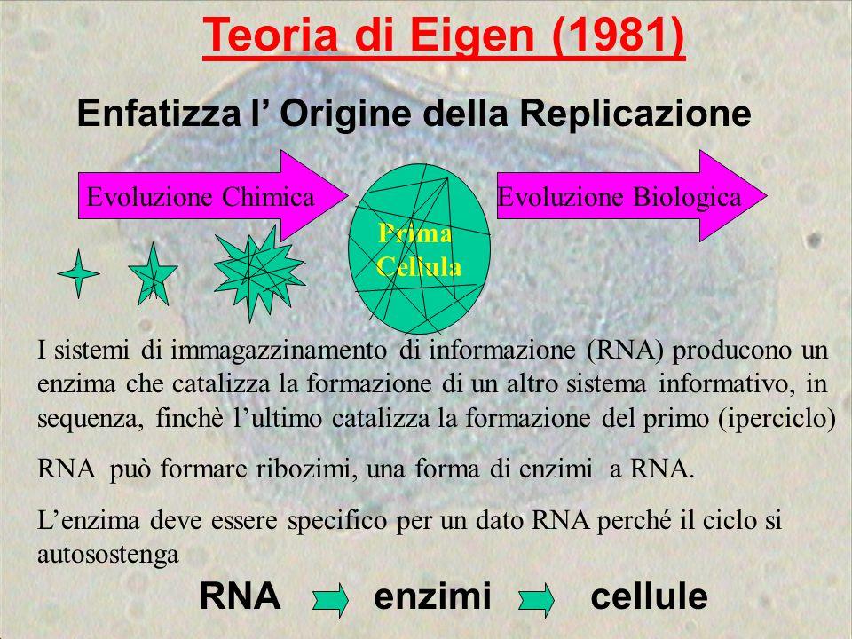 Teoria di Eigen (1981) Enfatizza l' Origine della Replicazione RNA