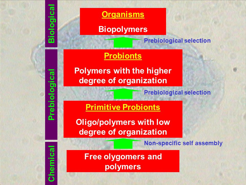 Polymers with the higher degree of organization
