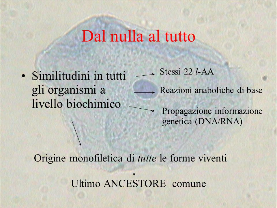 Dal nulla al tutto Stessi 22 l-AA. Similitudini in tutti gli organismi a livello biochimico. Reazioni anaboliche di base.