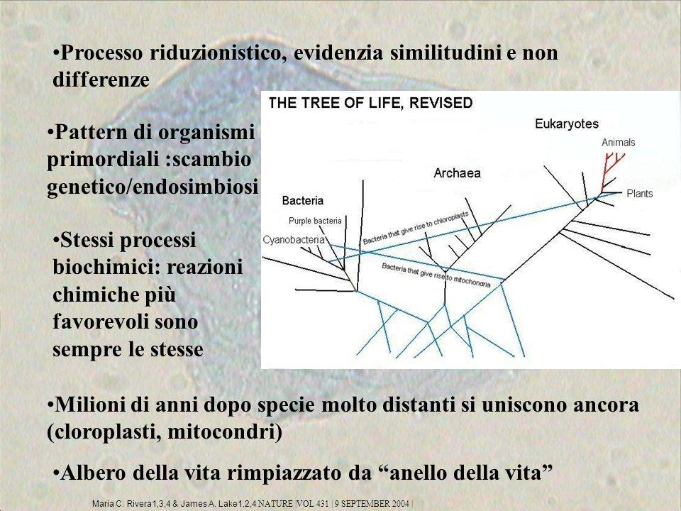 Processo riduzionistico, evidenzia similitudini e non differenze