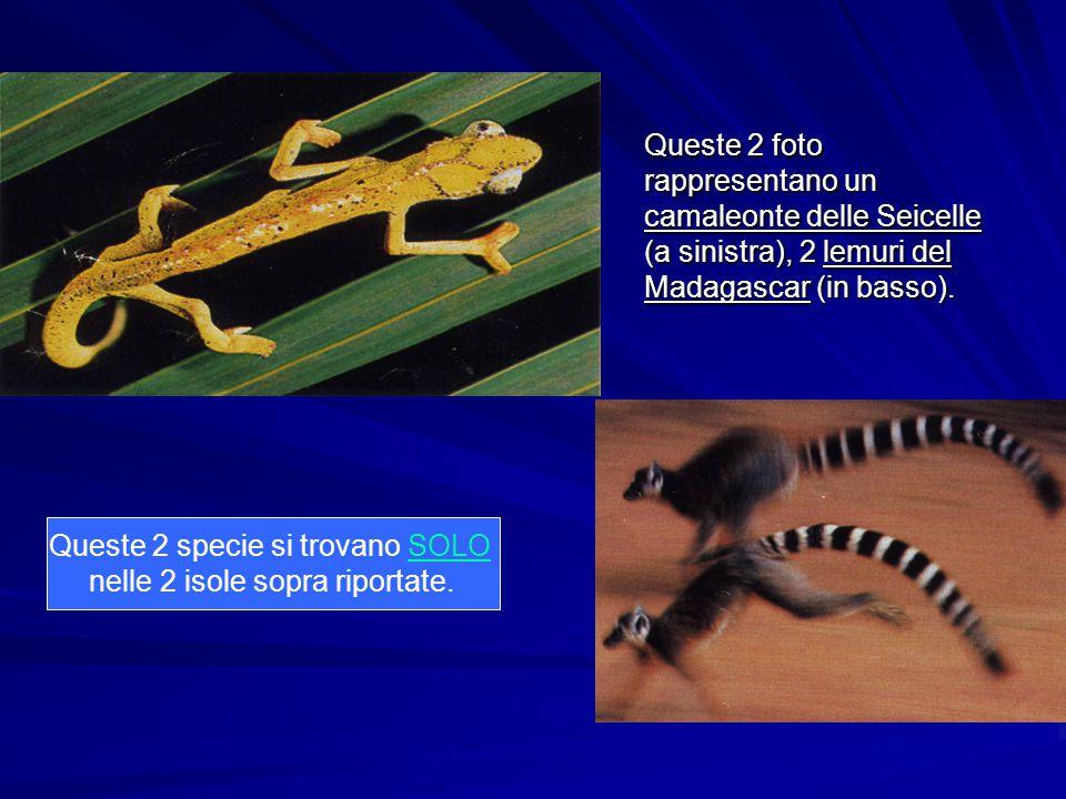 Queste 2 specie si trovano SOLO nelle 2 isole sopra riportate.