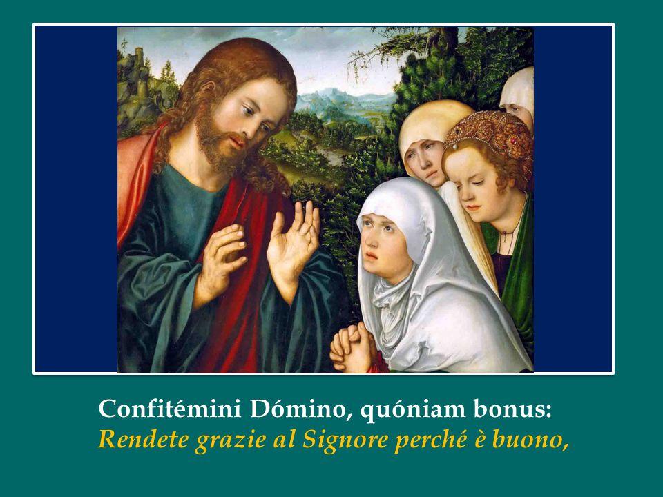 Confitémini Dómino, quóniam bonus: