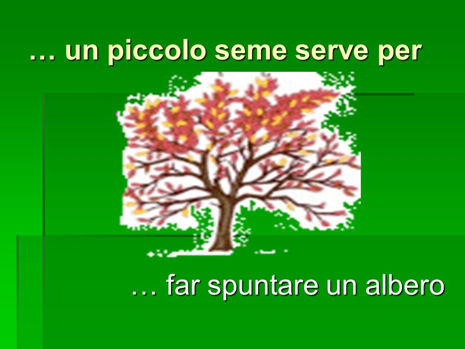 … un piccolo seme serve per