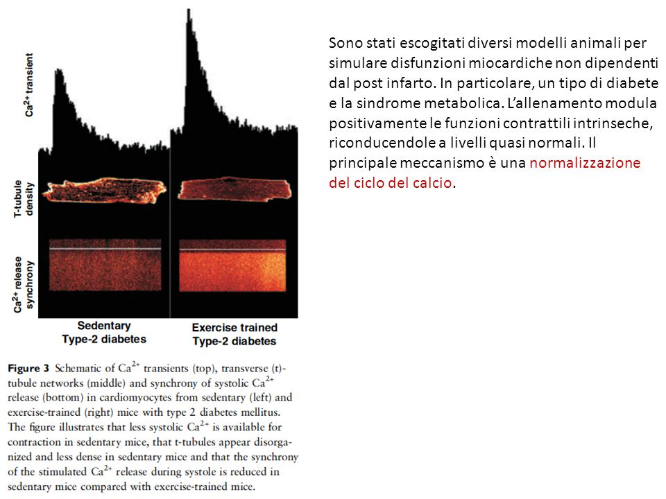 Sono stati escogitati diversi modelli animali per simulare disfunzioni miocardiche non dipendenti dal post infarto.