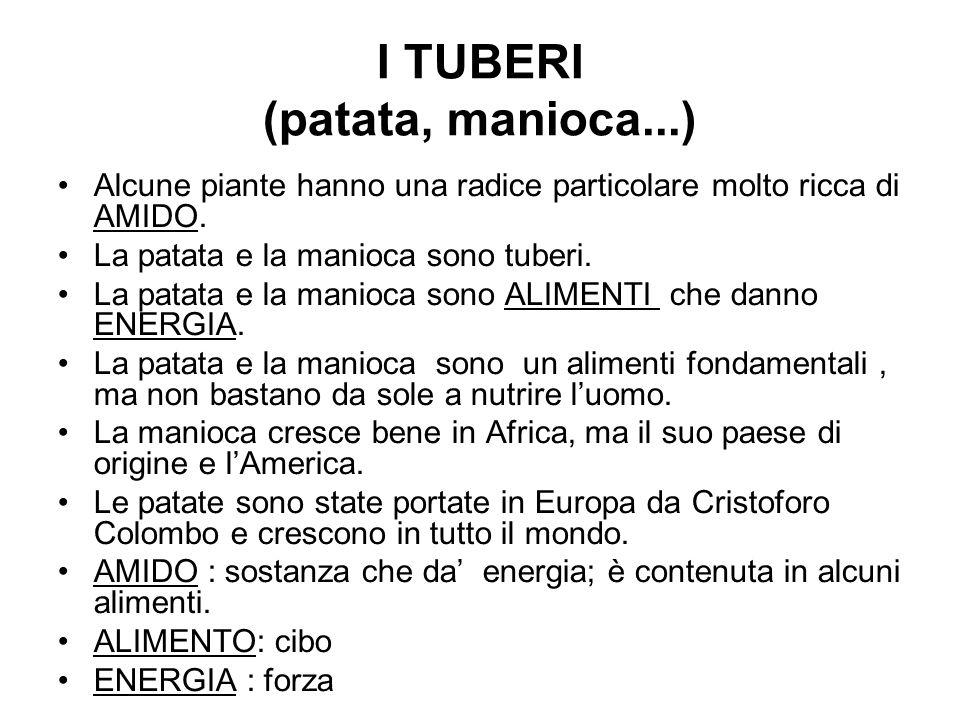 I TUBERI (patata, manioca...)