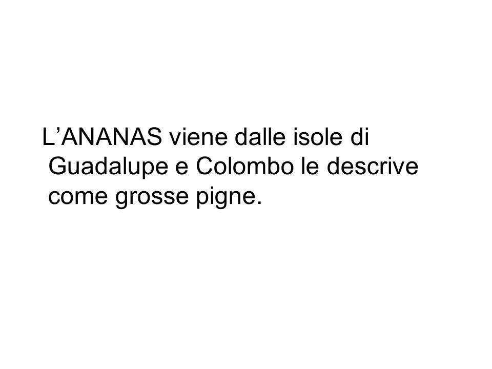 L'ANANAS viene dalle isole di Guadalupe e Colombo le descrive come grosse pigne.