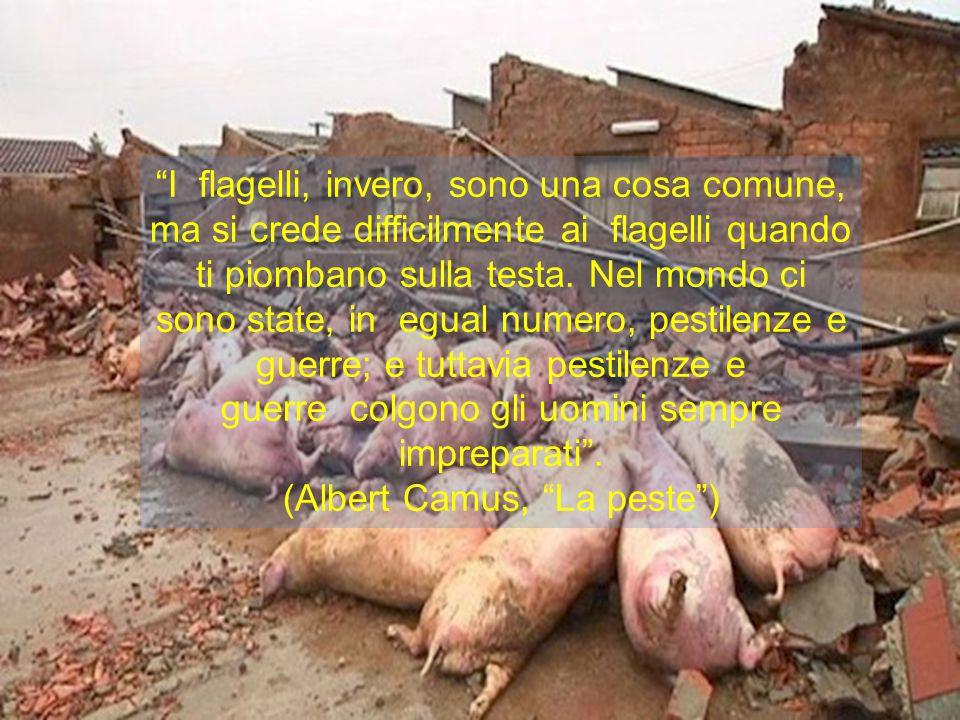 (Albert Camus, La peste )