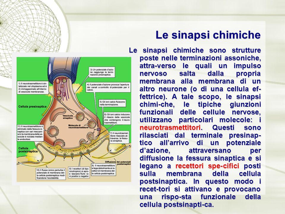 Le sinapsi chimiche