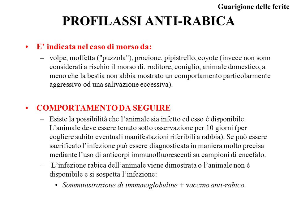PROFILASSI ANTI-RABICA