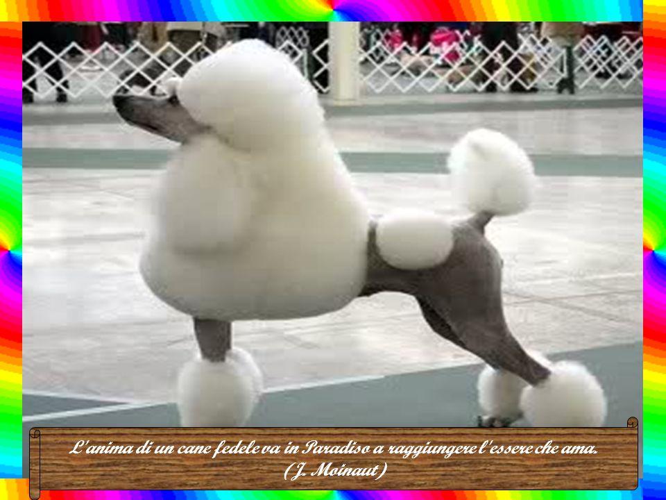 L anima di un cane fedele va in Paradiso a raggiungere l essere che ama. (J. Moinaut)