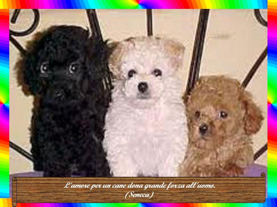 L amore per un cane dona grande forza all uomo. (Seneca)