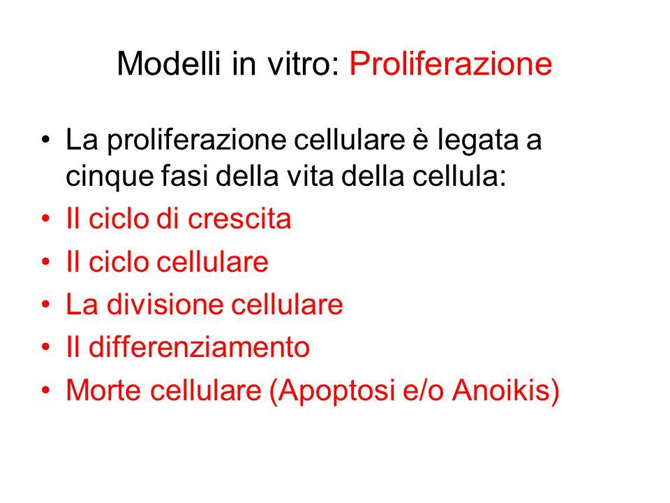 Modelli in vitro: Proliferazione
