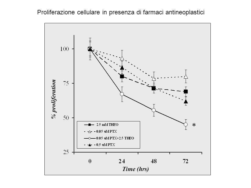 * Proliferazione cellulare in presenza di farmaci antineoplastici