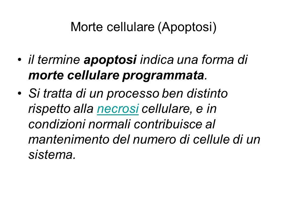 Morte cellulare (Apoptosi)