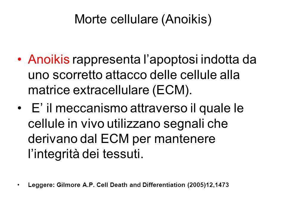 Morte cellulare (Anoikis)