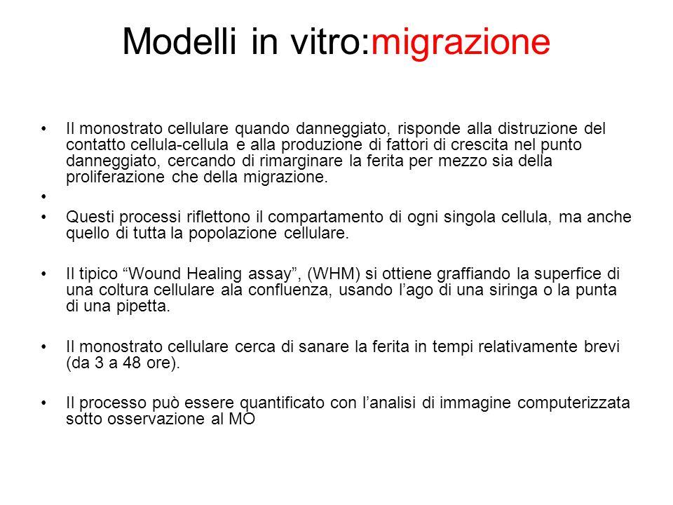 Modelli in vitro:migrazione