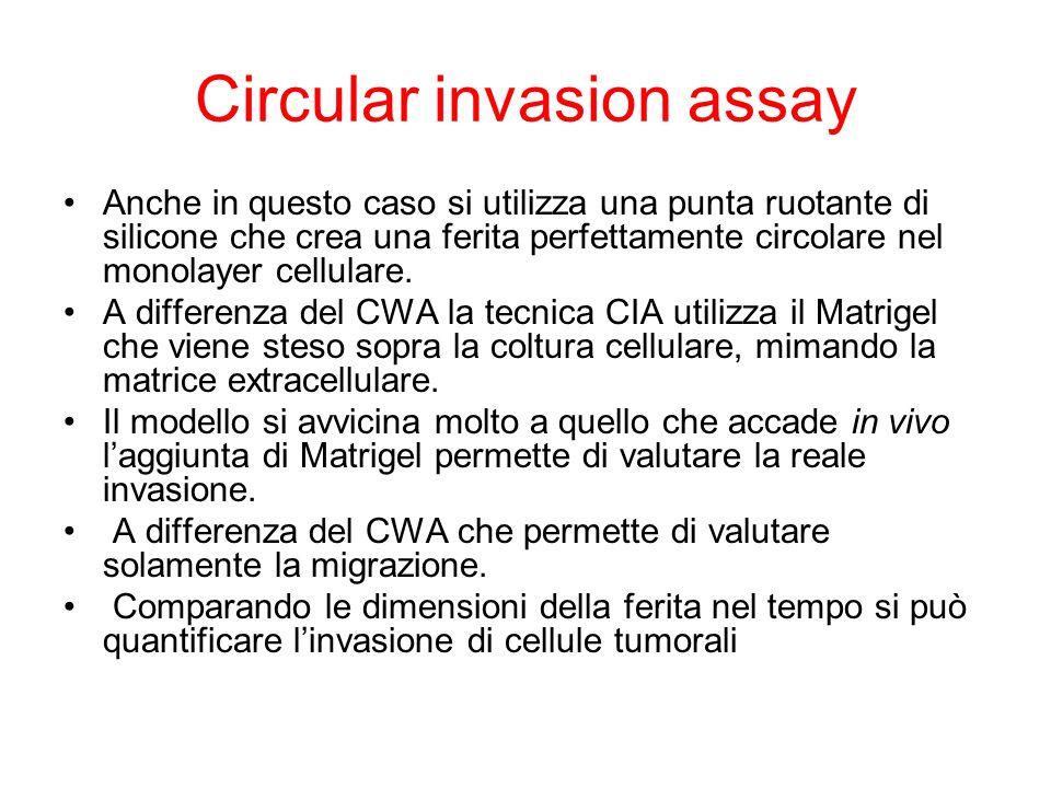 Circular invasion assay
