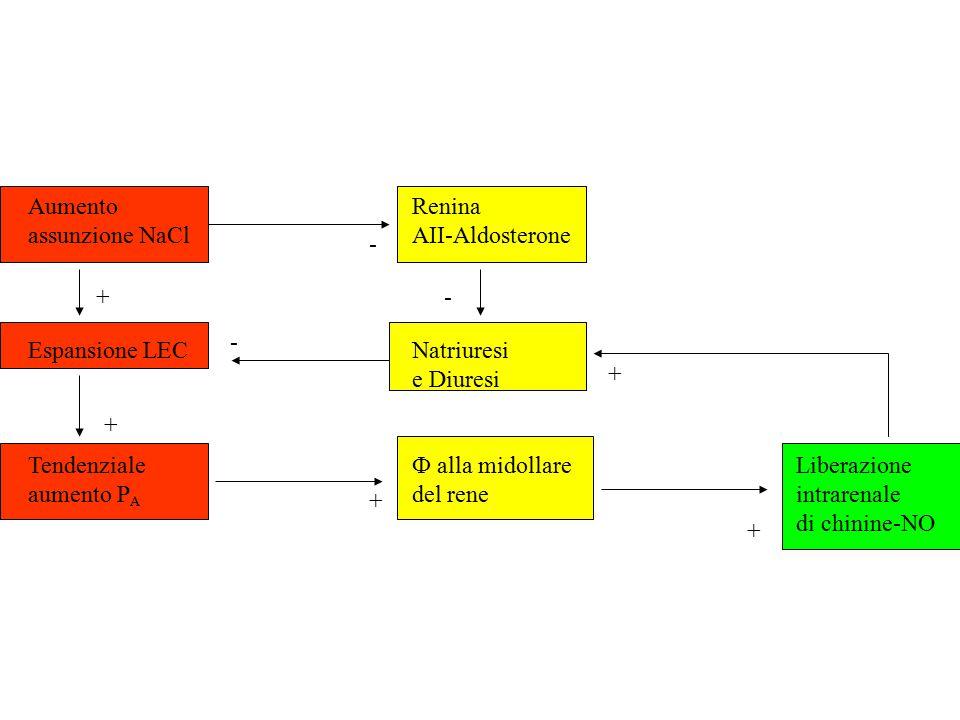 Aumento Renina assunzione NaCl AII-Aldosterone. Espansione LEC Natriuresi. e Diuresi. Tendenziale Ф alla midollare Liberazione.