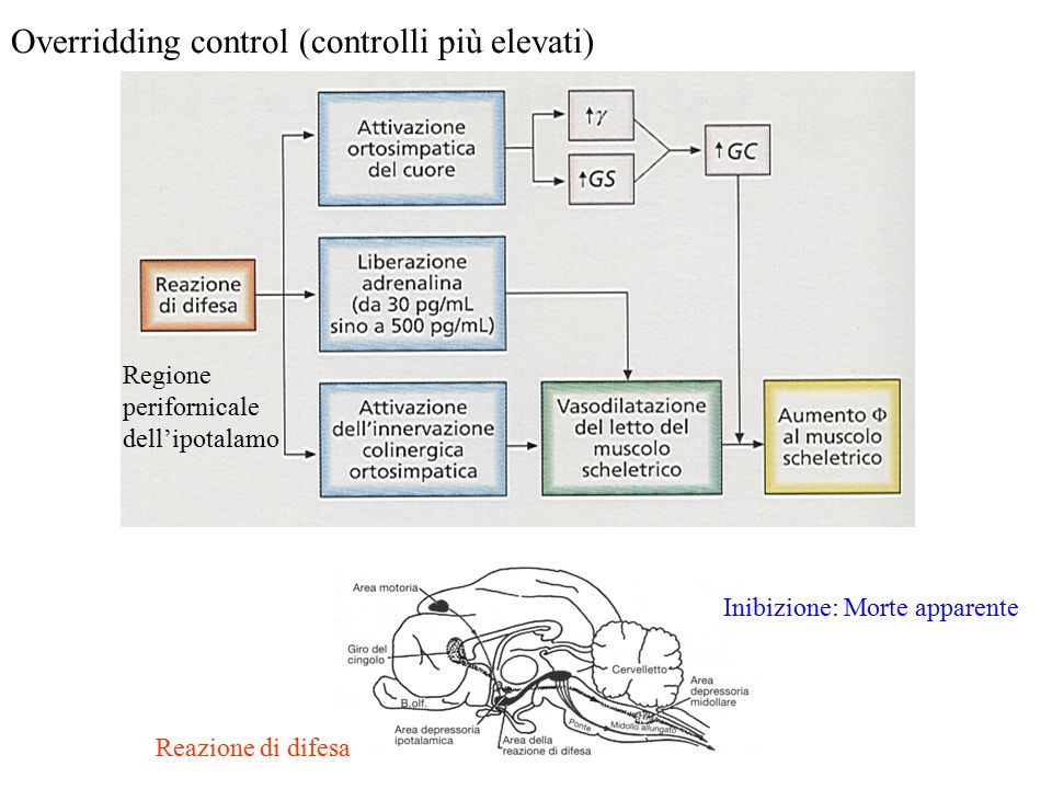 Overridding control (controlli più elevati)