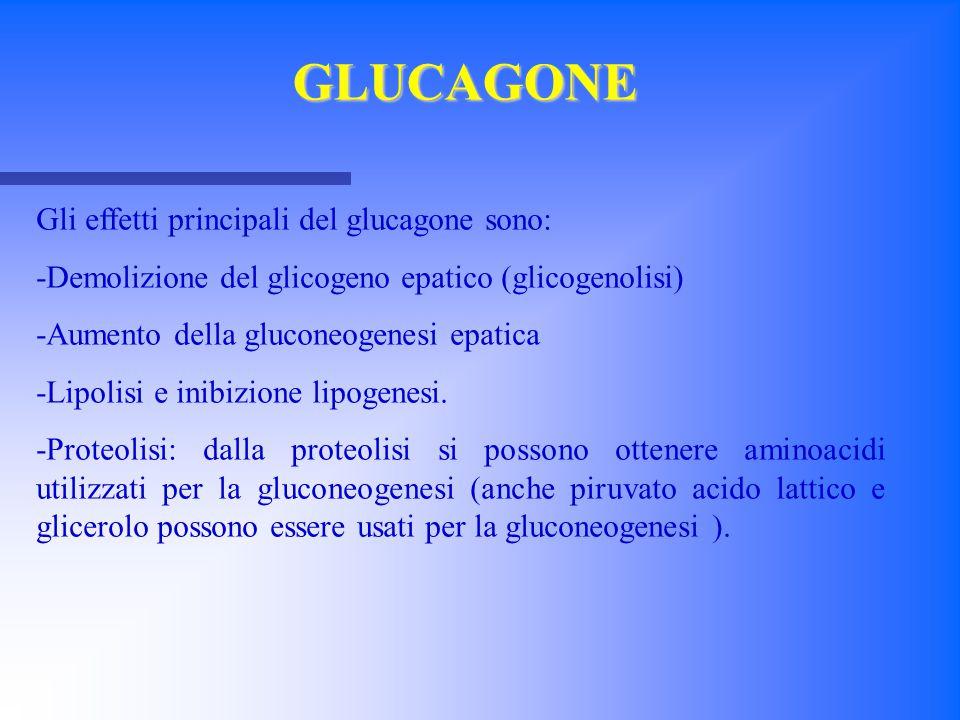 GLUCAGONE Gli effetti principali del glucagone sono:
