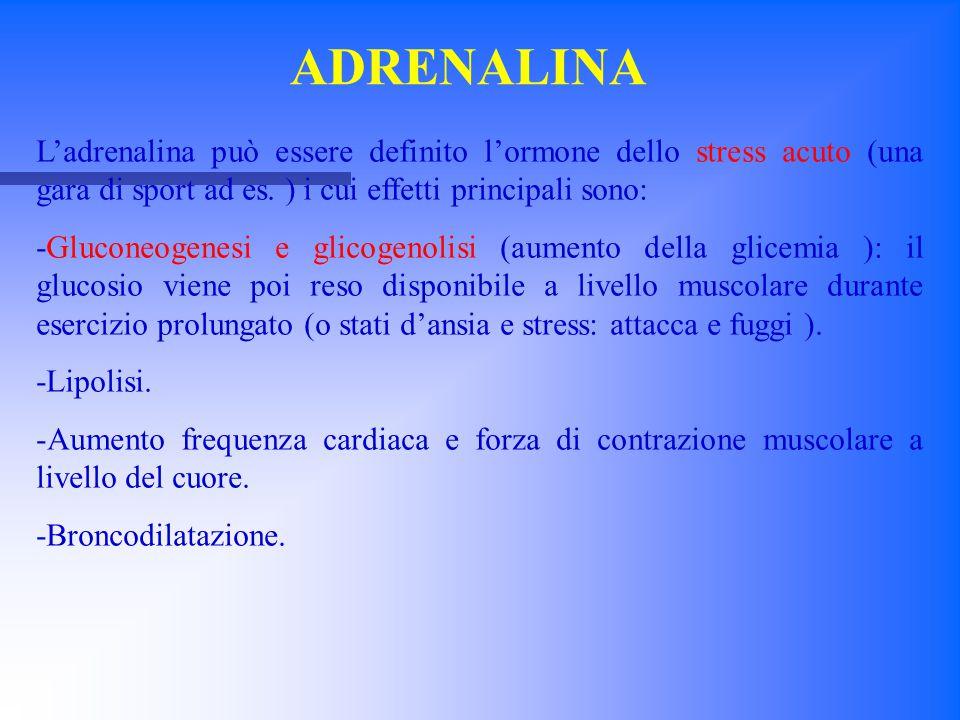 ADRENALINA L'adrenalina può essere definito l'ormone dello stress acuto (una gara di sport ad es. ) i cui effetti principali sono: