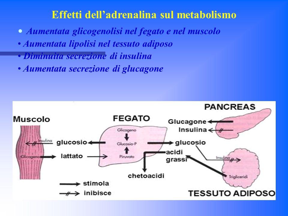 Effetti dell'adrenalina sul metabolismo