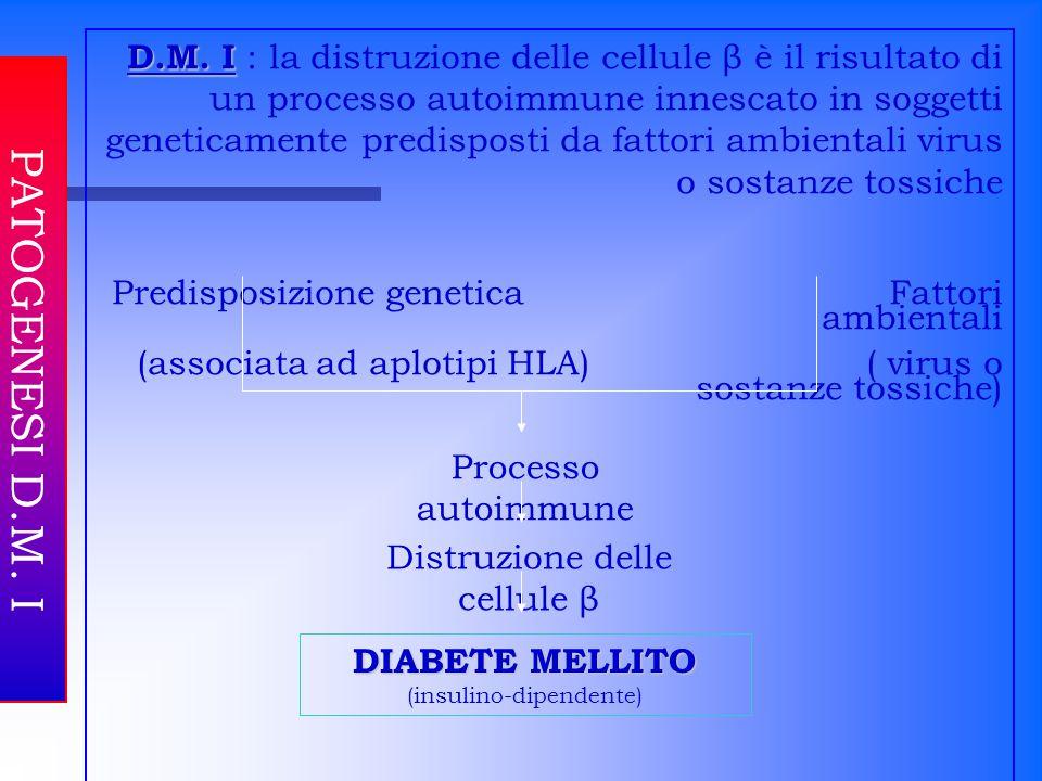 D.M. I : la distruzione delle cellule β è il risultato di un processo autoimmune innescato in soggetti geneticamente predisposti da fattori ambientali virus o sostanze tossiche