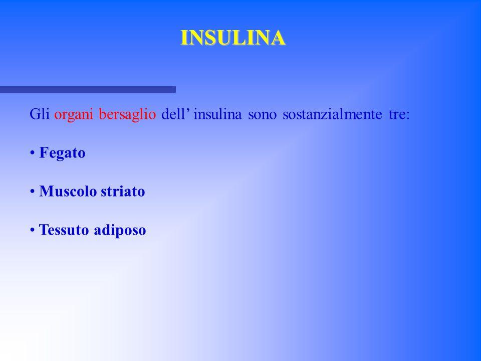 INSULINA Gli organi bersaglio dell' insulina sono sostanzialmente tre: