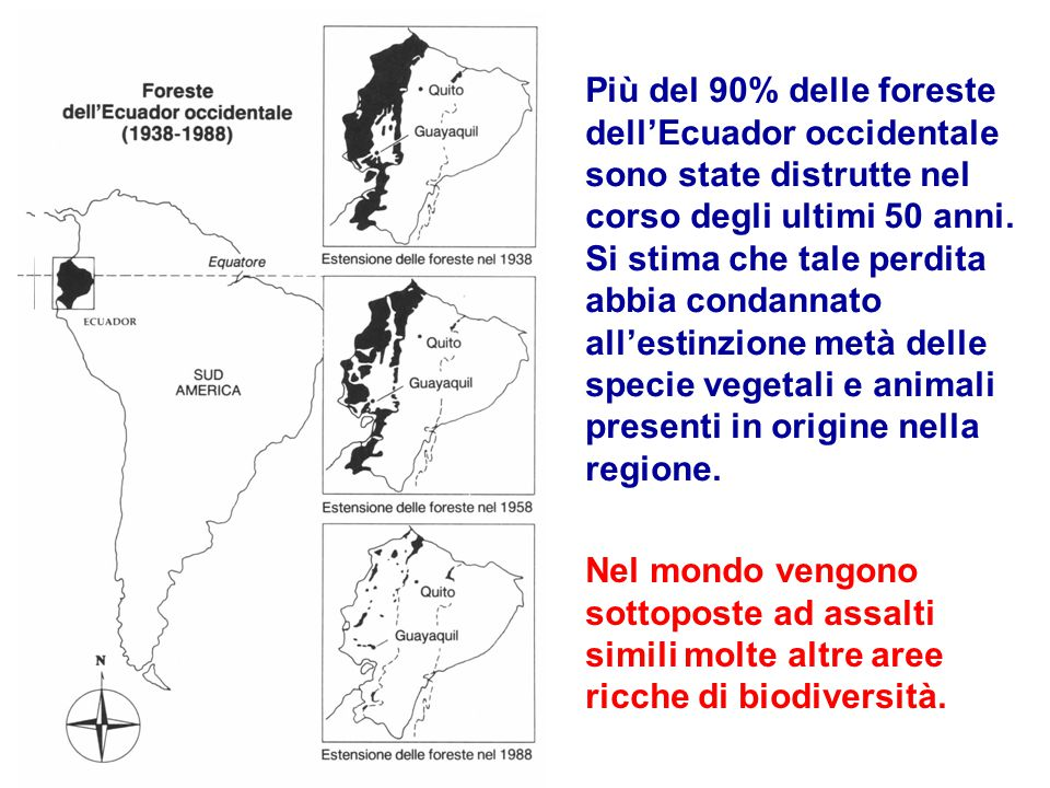 Più del 90% delle foreste dell'Ecuador occidentale sono state distrutte nel corso degli ultimi 50 anni. Si stima che tale perdita abbia condannato all'estinzione metà delle specie vegetali e animali presenti in origine nella regione.