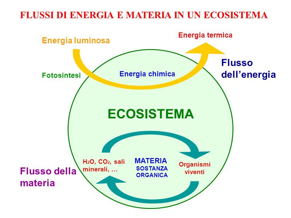 ECOSISTEMA FLUSSI DI ENERGIA E MATERIA IN UN ECOSISTEMA