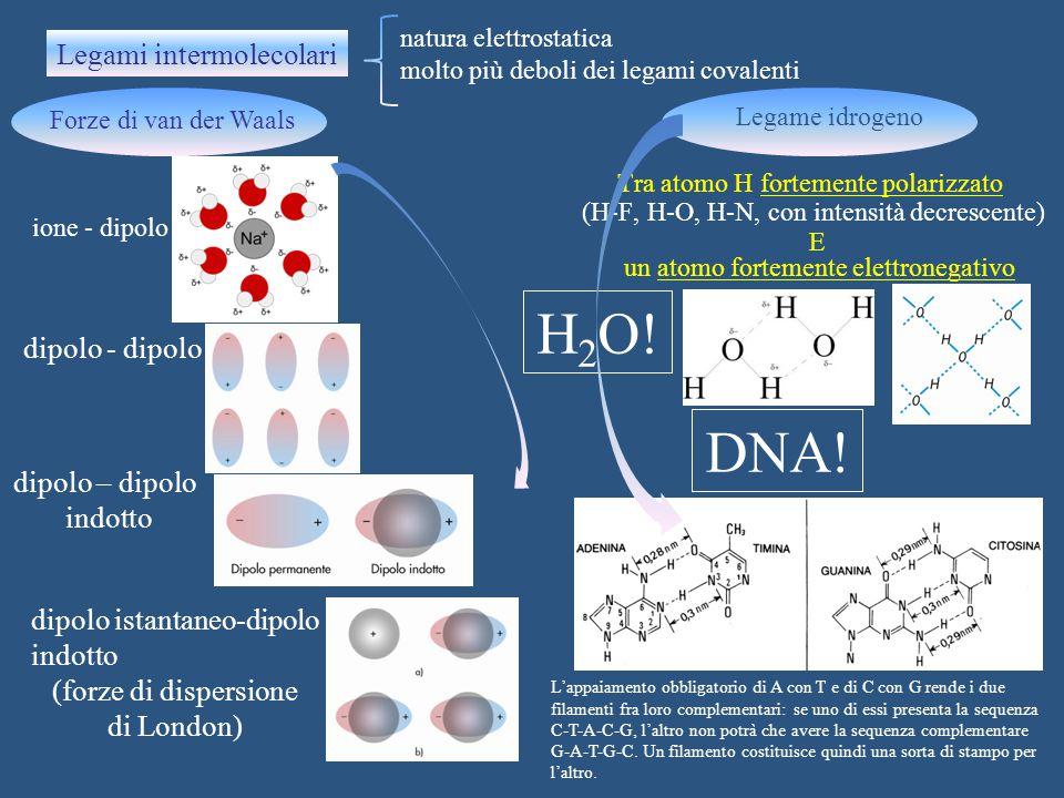H2O! DNA! Legami intermolecolari dipolo - dipolo dipolo – dipolo