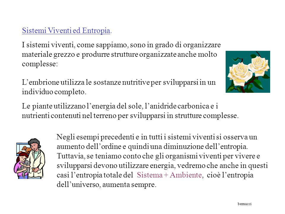 Sistemi Viventi ed Entropia.