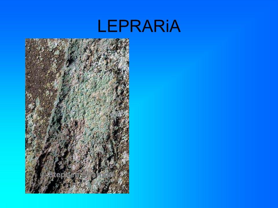 LEPRARiA