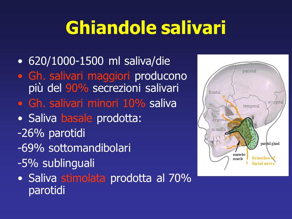 Ghiandole salivari 620/1000-1500 ml saliva/die