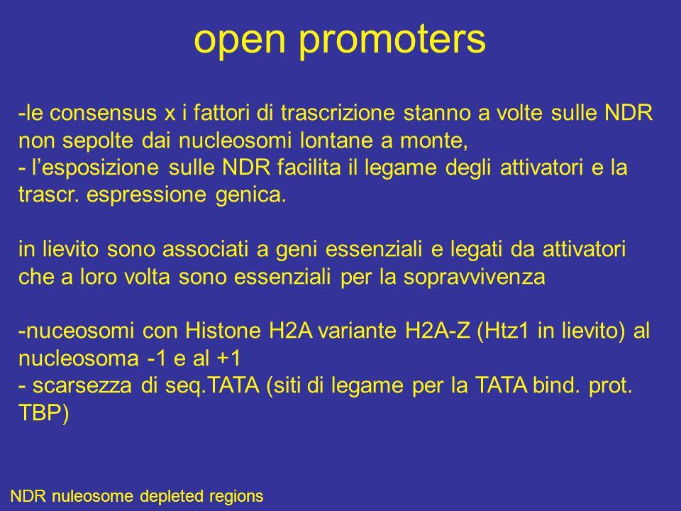 open promoters -le consensus x i fattori di trascrizione stanno a volte sulle NDR. non sepolte dai nucleosomi lontane a monte,