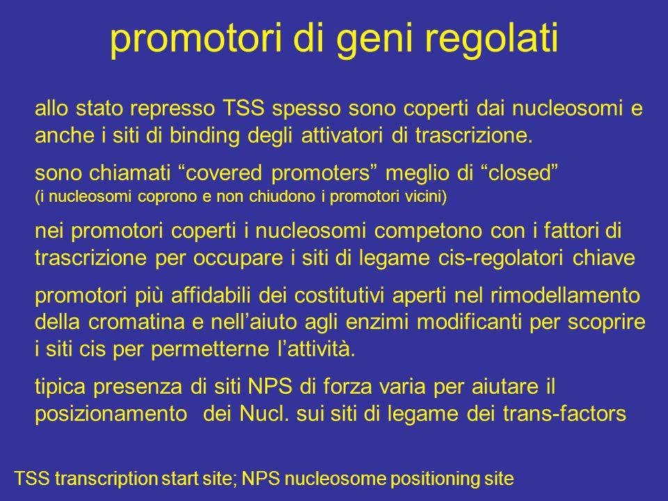 promotori di geni regolati
