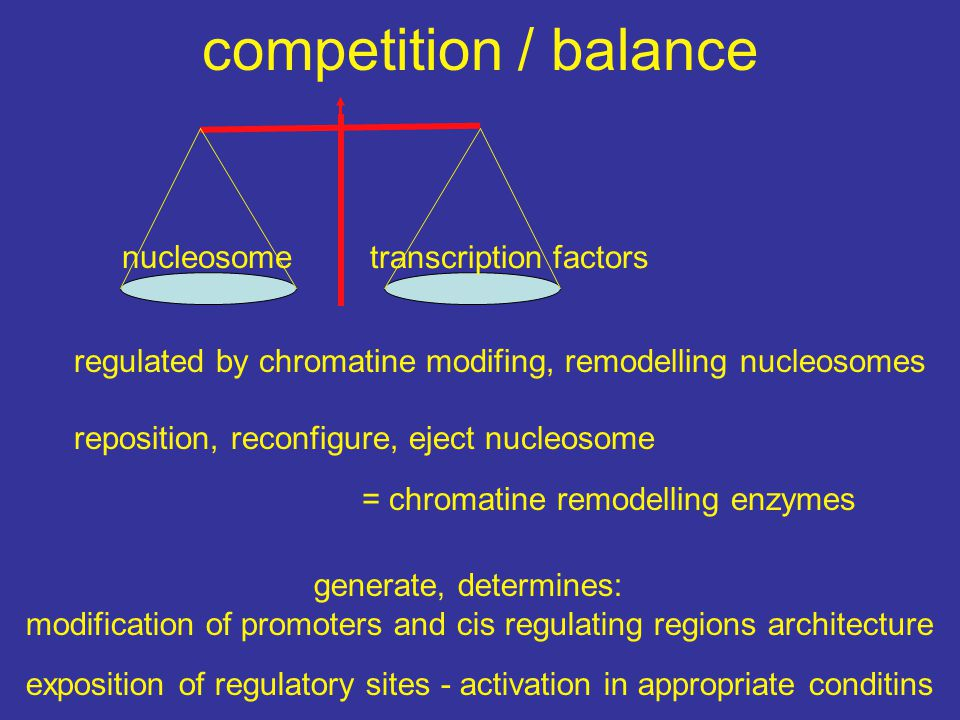 competition / balance nucleosome transcription factors