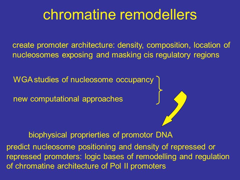 chromatine remodellers