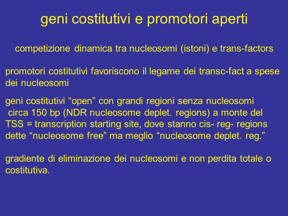 geni costitutivi e promotori aperti