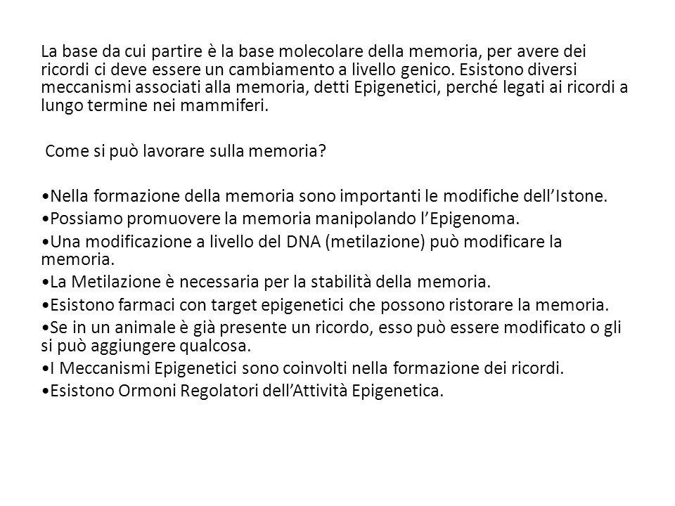 La base da cui partire è la base molecolare della memoria, per avere dei ricordi ci deve essere un cambiamento a livello genico. Esistono diversi meccanismi associati alla memoria, detti Epigenetici, perché legati ai ricordi a lungo termine nei mammiferi.