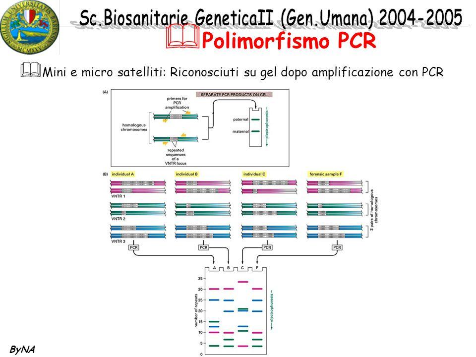 Polimorfismo PCR Mini e micro satelliti: Riconosciuti su gel dopo amplificazione con PCR ByNA