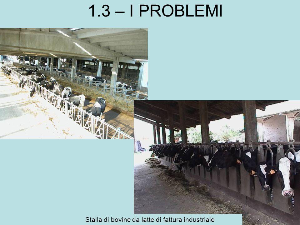 Stalla di bovine da latte di fattura industriale