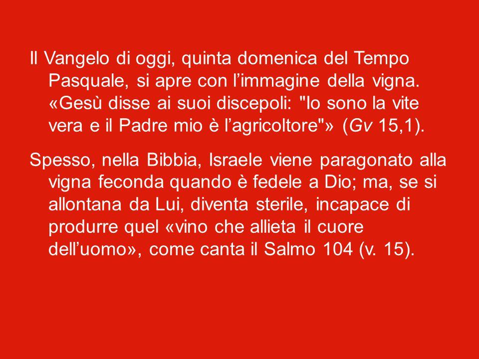Il Vangelo di oggi, quinta domenica del Tempo Pasquale, si apre con l'immagine della vigna.